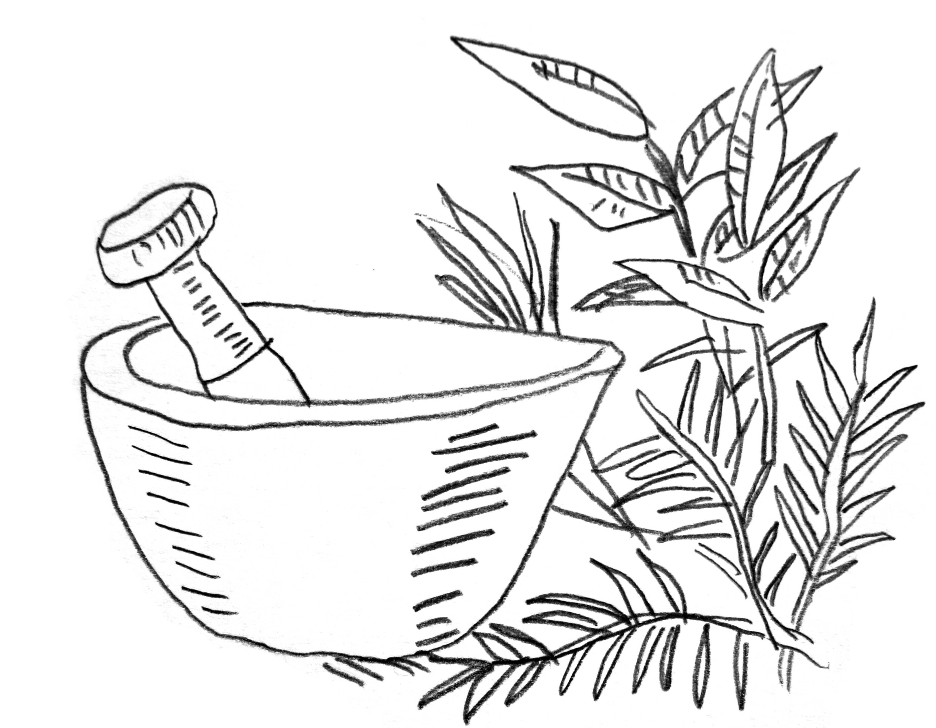 Pflanze2